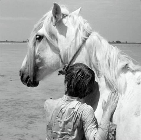 De quelle couleur est la robe du cheval camarguais Crin Blanc ?