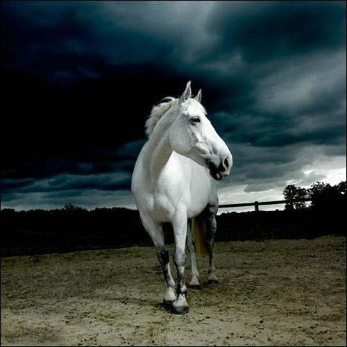 """Qui a écrit """"La mort du petit cheval"""" ?"""