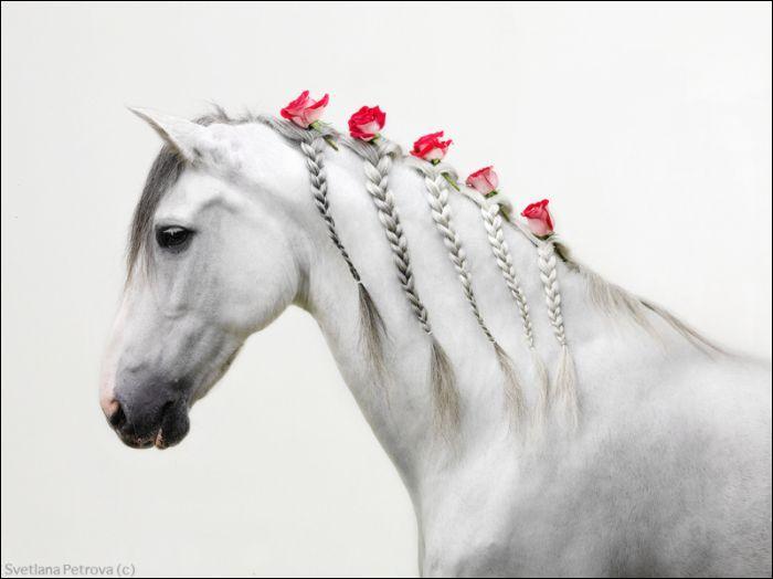 """Qui a écrit """"Le cheval pâle"""" ?"""