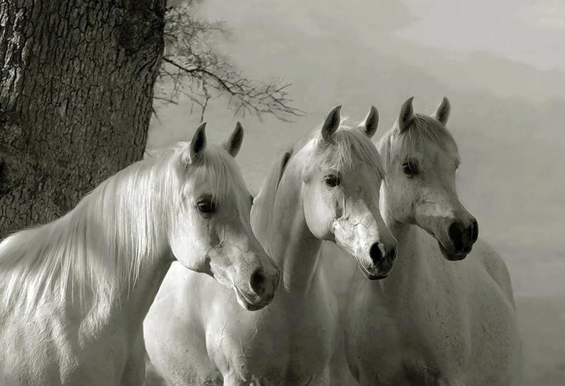 Jeu de petits chevaux !