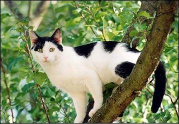 Un chat domestique retourné à la vie sauvage est un chat haret.
