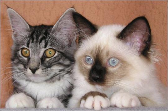 Le chat fait partie de la famille des félidés.