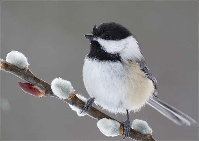 Dans le roman de Renart, quel oiseau était Mouflard ?