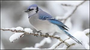 Quel est l'oiseau dont l'homonyme est vert et rafraîchissant ?