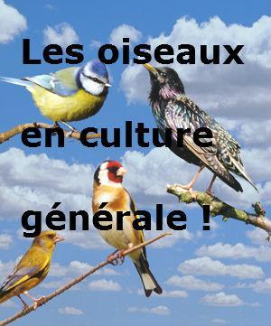 Les oiseaux en culture générale