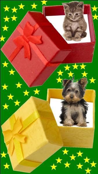 Quelle est la couleur du cadeau pour la petite Line Renaud ?