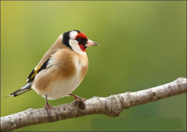 Quizz 10 oiseaux reconna tre quiz oiseaux for Oiseau marron