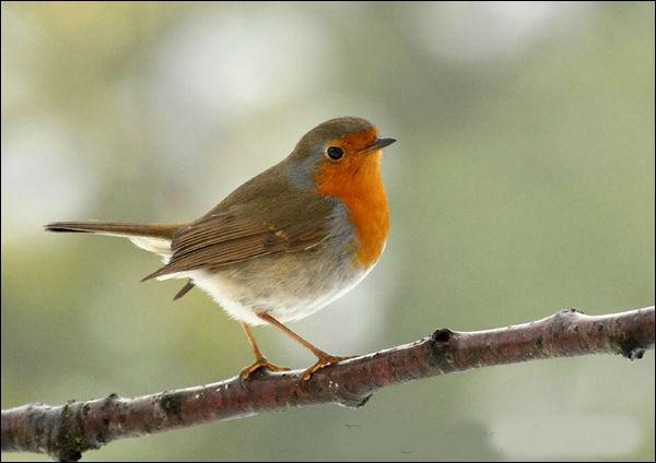 Quel est ce charmant petit oiseau ?