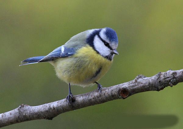10 oiseaux à reconnaître