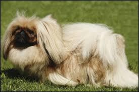 Quelle est la race du chien présenté sur la photo ?