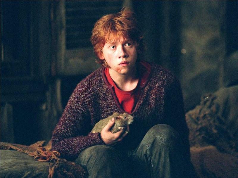 """Complétez : """"Il tendait vainement la main vers Croûtard qui poussait de petits cris de (...) en griffant le cou et le visage de Ron dans ses efforts pour s'enfuir."""""""
