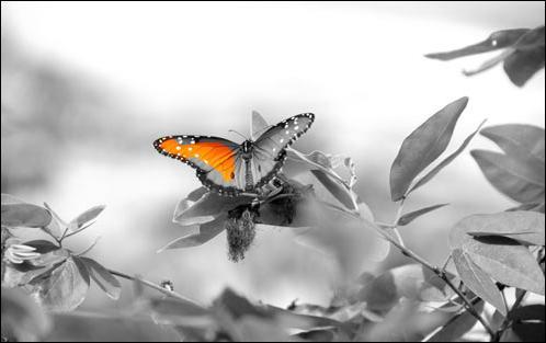 """Qui tient le rôle principal dans le film de Philippe Muyl """"Le papillon"""", sorti en 2002 ?"""