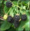 Savez-vous le nom de ce fruit ?
