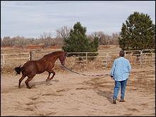 Comment s'appelle l'objet qui relie l'homme et le cheval sur la photo ?