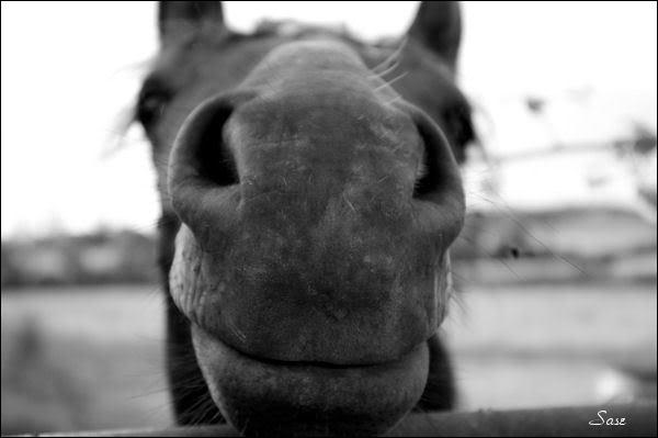 Comment s'appelle cette partie du cheval ?