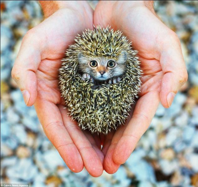 Animal très rare, j'ai le plaisir de vous présenter ...