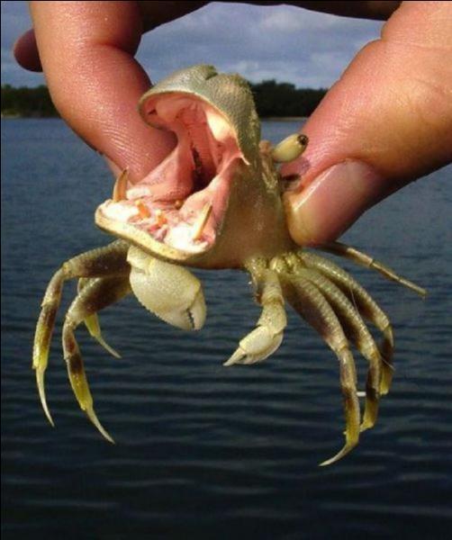 Après bien des recherches sur la plage, je l'ai surpris qui sortait de son trou !