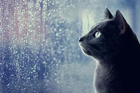 Une journée de pluie