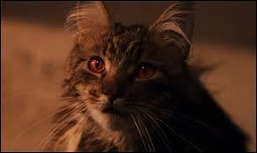 """À qui appartient le chat retrouvé """"apparemment"""" mort ?"""