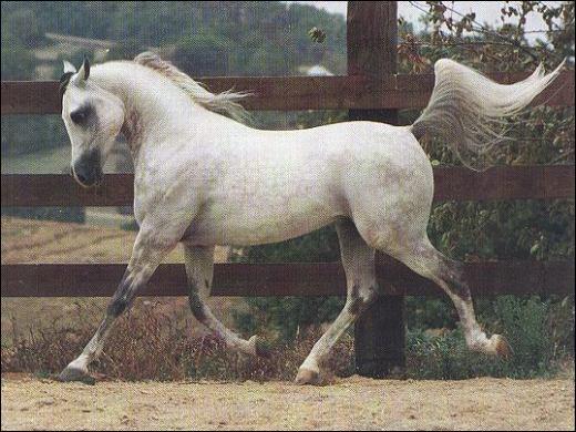Quelle est la vitesse moyenne d'un cheval au trot ?