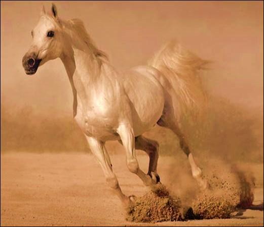Quelle est la vitesse moyenne d'un cheval au galop ?