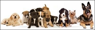 """Comment dit-on """"chien"""" en espagnol ?"""