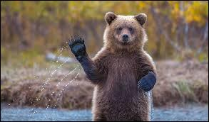 """Et pour finir, comment dit-on """"ours"""" en espagnol ?"""