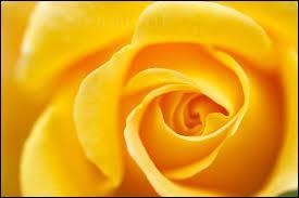 Et sais-tu comment on dit jaune ?
