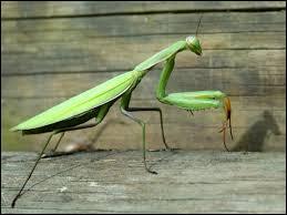 Trouvez la bonne orthographe du nom de cet insecte.