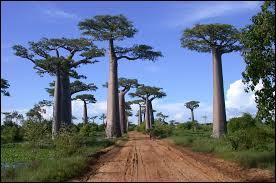 Certains scientifiques ont pu trouver l'origine commune des habitants de Madagascar : une trentaine de personnes arrivées...