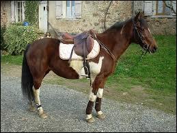 Ce cheval est-il prêt pour aller travailler ?