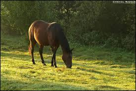 Le cheval est... ?