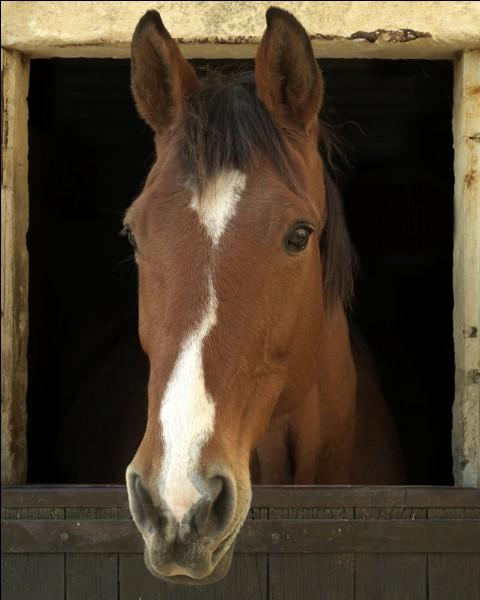 Comment abordes-tu un cheval ?