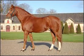 De quelle couleur est ce cheval ?