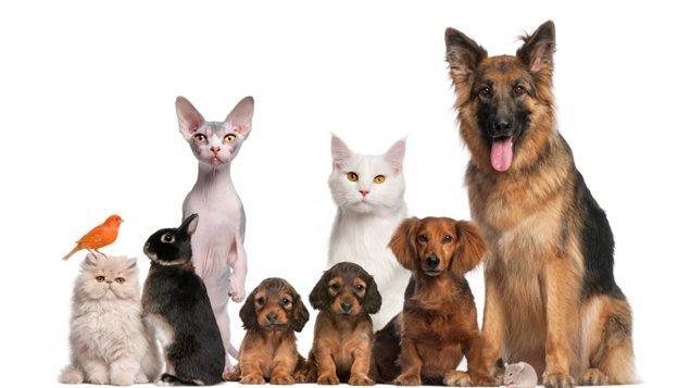 Les 10 différents animaux
