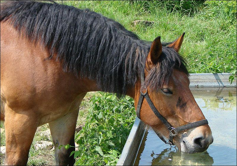 Le cheval boit en moyenne par jour :