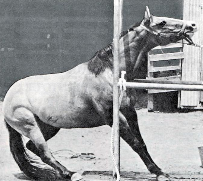 Que faites-vous si votre cheval tire au renard ?