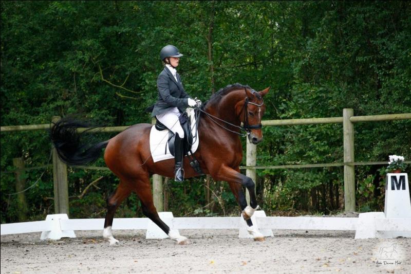 L'impulsion pour le cheval ou le poney, c'est le désir de :