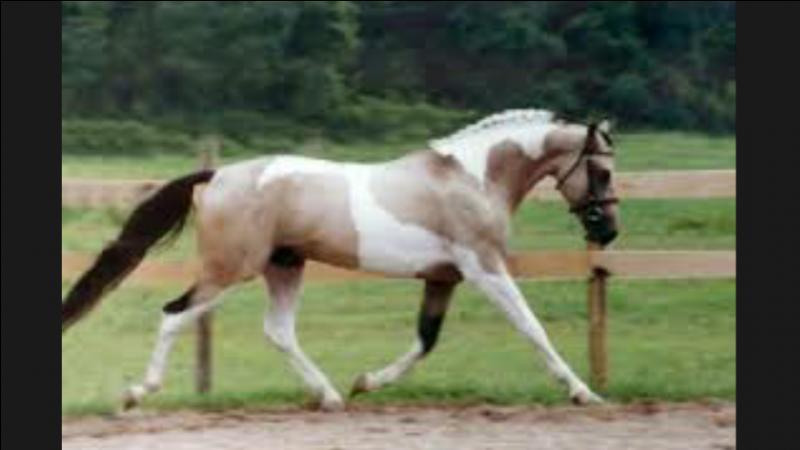 Autrefois, en France, les chevaux pies étaient...