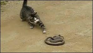 Qui meurt mordu par un serpent dans le cycle 4 ?