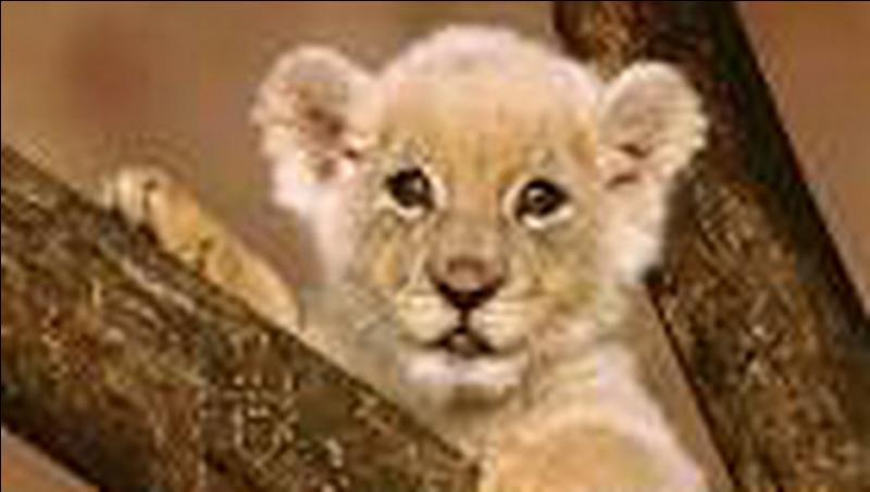 Super Quizz Les bébés animaux - Quiz Animaux, Bebes, Parle HE55