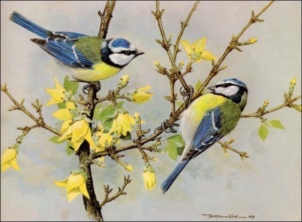 Que sont ces oiseaux ?