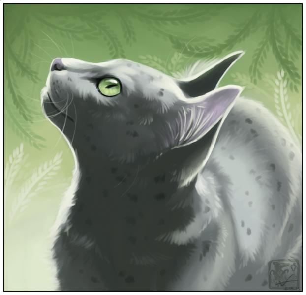 Lgdc rivi re quiz qcm la guerre des clans guerre - Dessiner une chatte ...