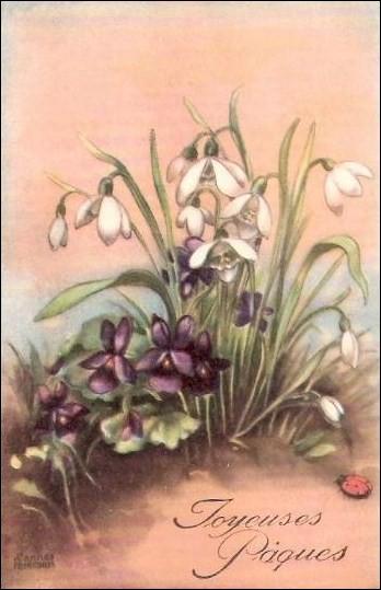 Que sont les fleurs blanches ?