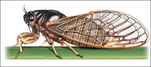 (Voir photo) - Il faut demander : « …… » pour obtenir la réponse : « Un insecte » (Cochez-la question)