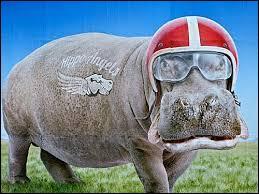 De quelle couleur le lait d'un hippopotame est-il ?