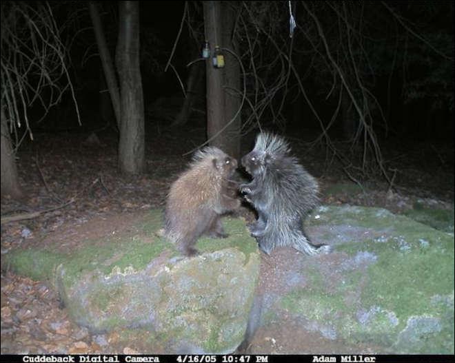 Regarde bien cette photo, agrandis-la, reconnais-tu ces animaux ?