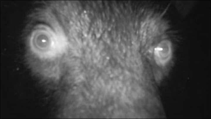 Alors, as-tu vraiment un oeil de lynx, quel est cet animal ?