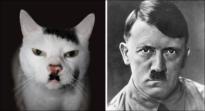 La petite moustache, la raie sur le côté. Ce chat nous rappelle une figure phare de l'histoire :