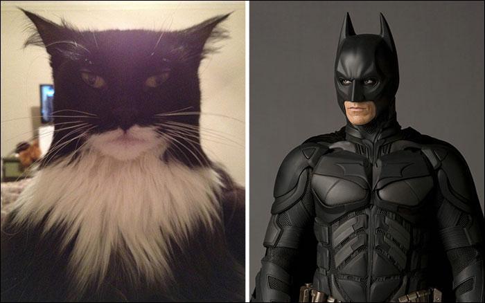 Ce chat est si ressemblant que l'on jurerait voir un déguisement. C'est le sosie du super-héros :
